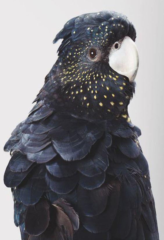 une collection de tatouages temporaires autour de belles plumes bohèmes