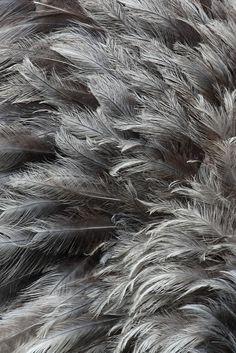 une collection inspirée de délicates plumes ethniques