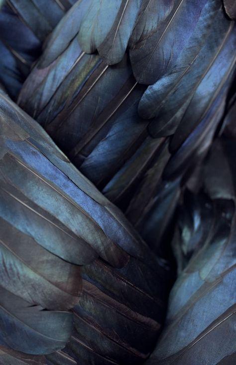de délicates plumes mêlant tons foncés à de beaux reflets