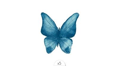 Papillon x5