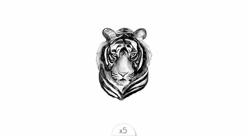 Tigre x5