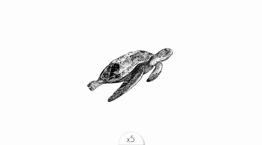 Turtle x5