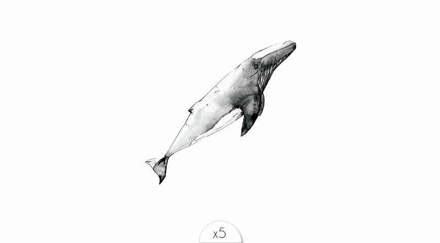 Baleine x5