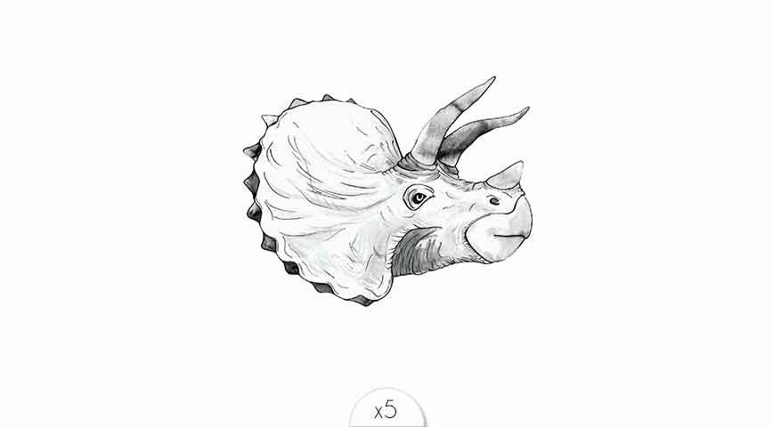 Rhinocéros x5