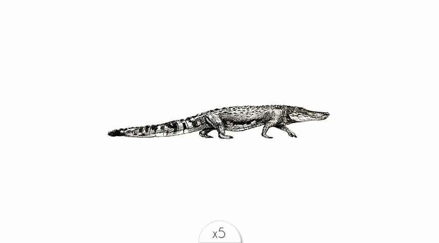 Crocodile x5