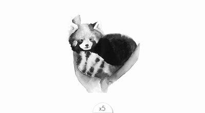 Red panda x5